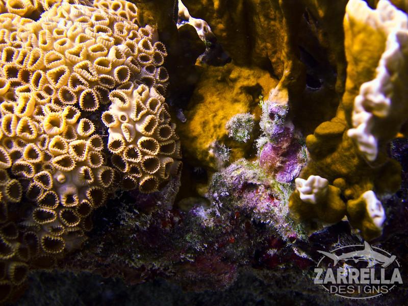 """Coral Polyp Macro"" (Key West, Florida)"