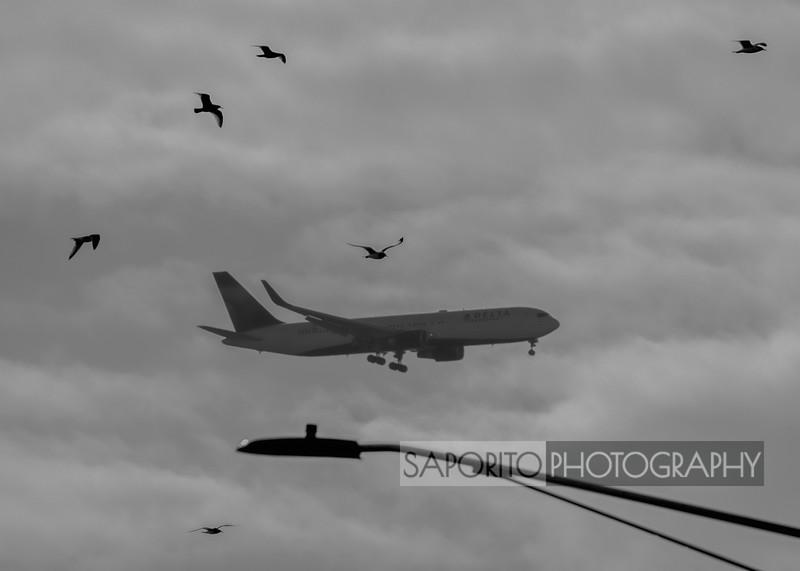 Delta 767 with birds