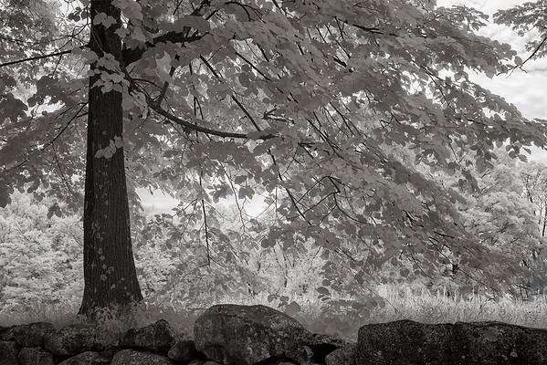Seeking wisdom of trees