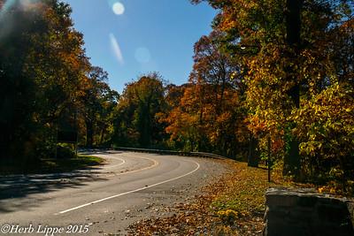 Fall Foliage Studies 11-4-2015