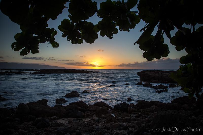 Oahu DF0A2552.jpg