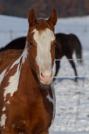 Dec 22nd John's horse