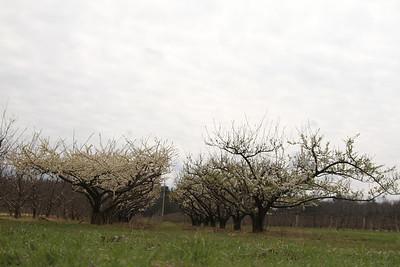 Easy Pickins Spring 2012