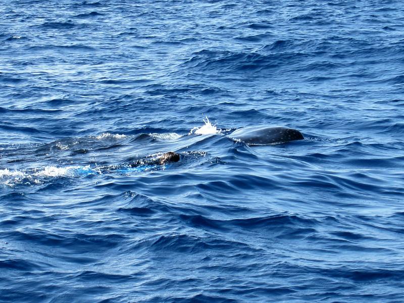 2014 Whale Shark - Cave Adventure-20.jpg