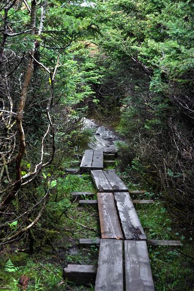 Mansfield Mountain Path 2.jpg