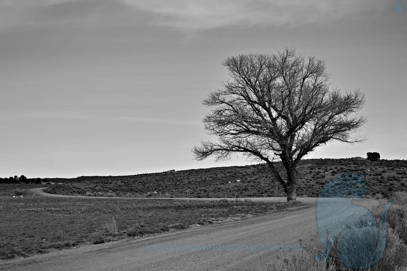 Tree by Road