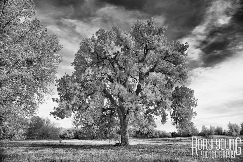 Tree6C.jpg
