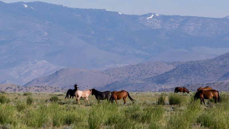Wild Mustangs 2019-46.jpg