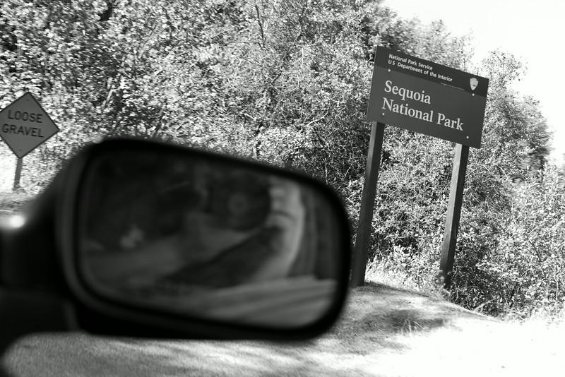 Sequoia_0013.jpg