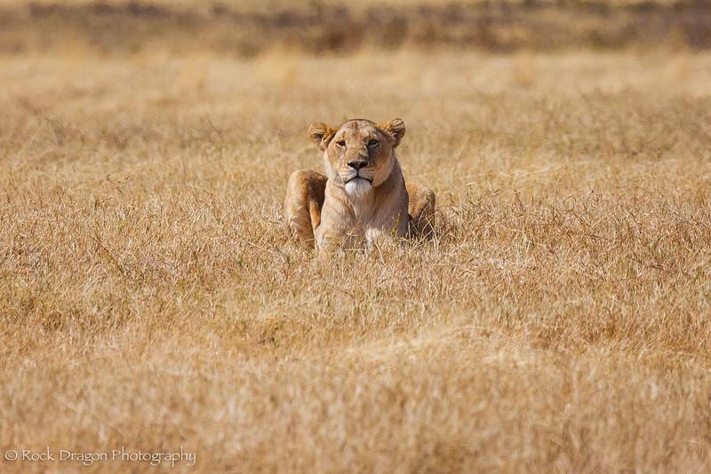 Ngorongoro-27.jpg