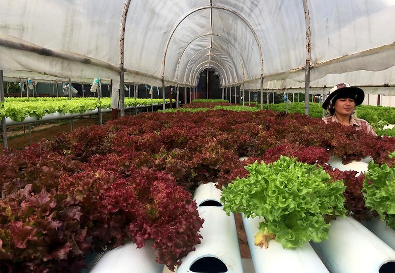 organic garden.jpg