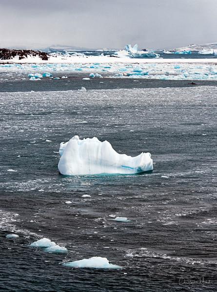 091204_penguin_island_7593a.JPG