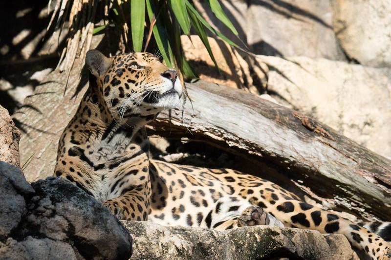JAX Zoo 2020-37.jpg