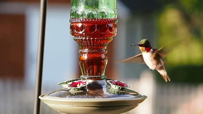 hummingbirds.mp4