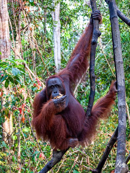 2012.10.07_Borneo_DSC_6923-Edit-Juno Kim.jpg