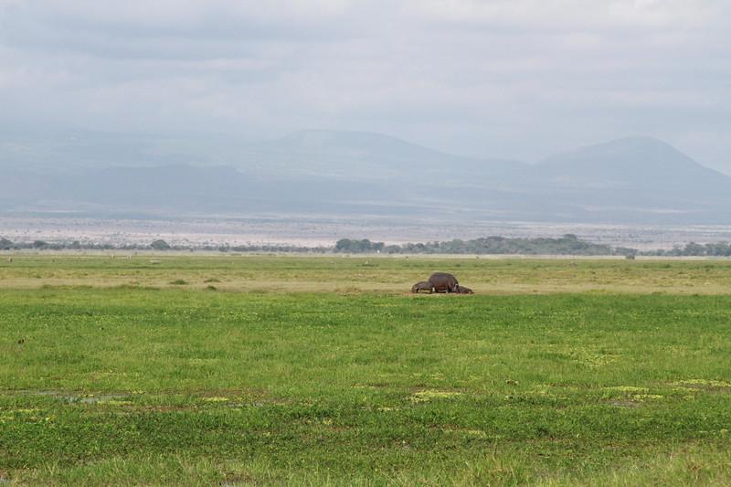 Kenya 2019 #2 851.JPG