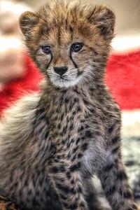 3-17-18 Safari Park