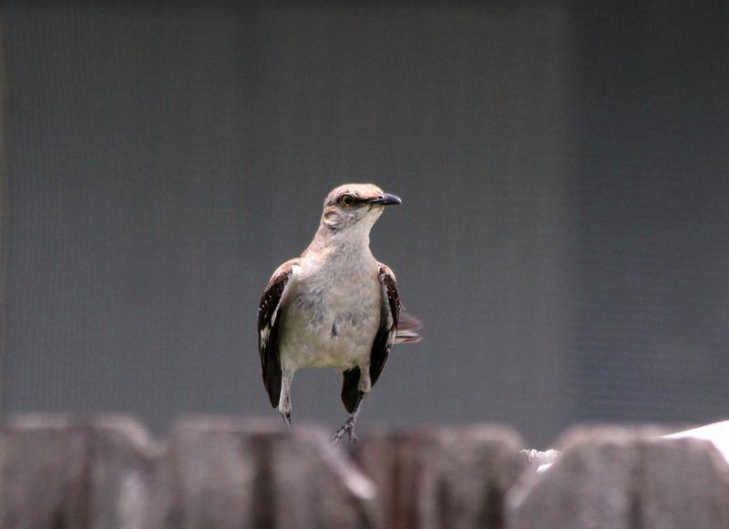 BirdJune23#5015.jpg