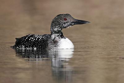 Tennessee Birding