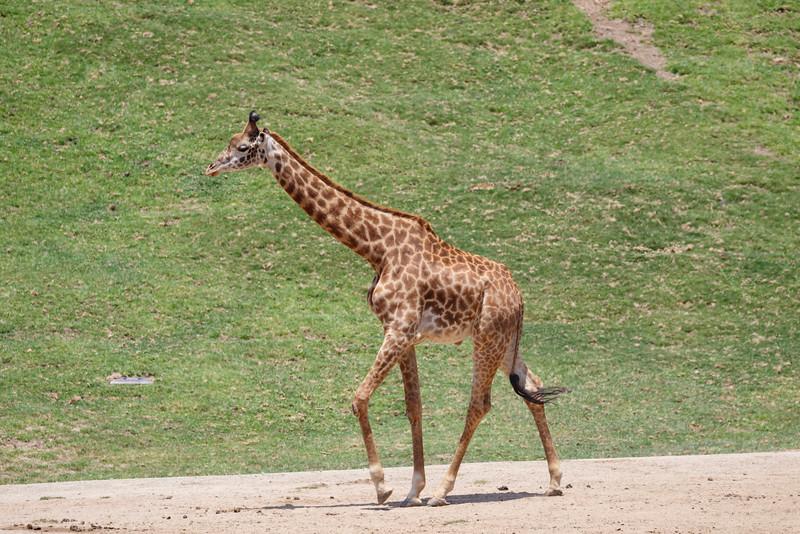 2016.06.01 Safari Park 0062.jpg