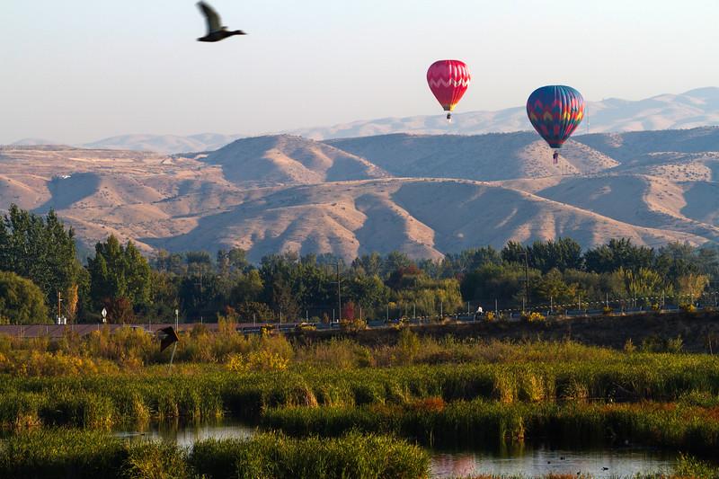 Balloons_10.06.12_197b.jpg