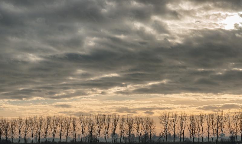 Poplars - Novellara, Reggio Emilia, Italy - December 15, 2015