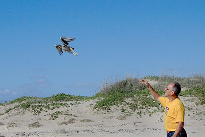 2011 South Padre Island Trapping