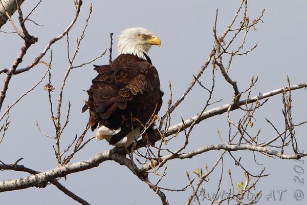 2012-03-24 Riverlands Migratory Bird Sanctuary