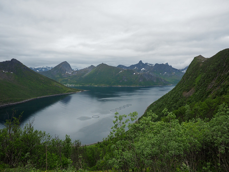 Fjord in Northern Norway