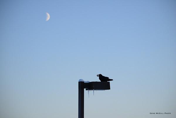 Ravens, 2014-12-27