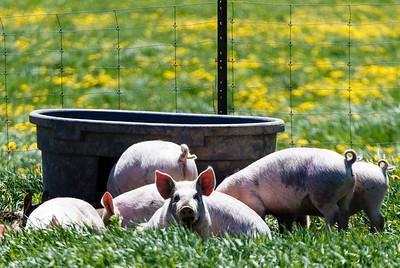 Farm Day Spring 2013