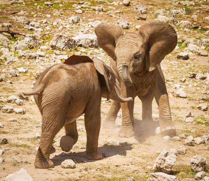 Elephant calves at Klein Okevi 12