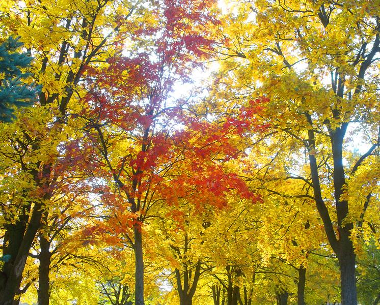 fall2009.jpg