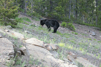Day 4 2014-06-25 Wed: 03 Black bear 400