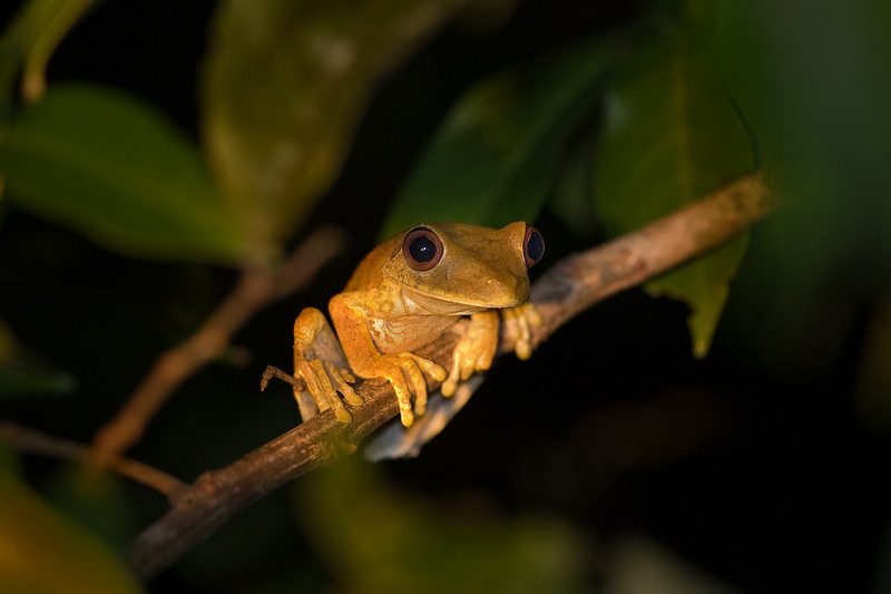 tiny tree frog.jpg