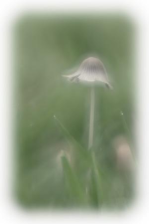 Fungi Fun