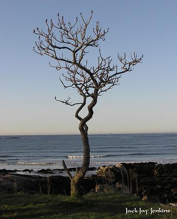Garrish Island Tree