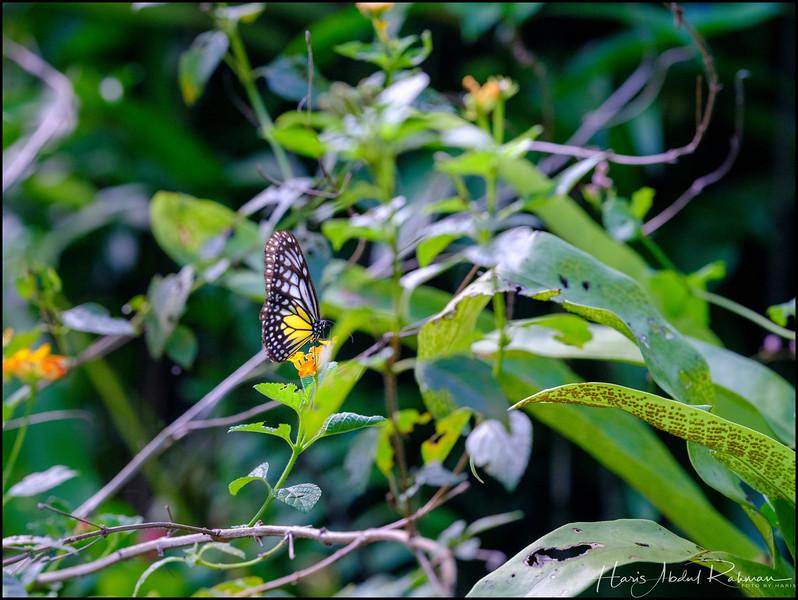 200104 KL Butterfly Park 40.jpg