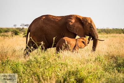 Wildlife (Kenya)