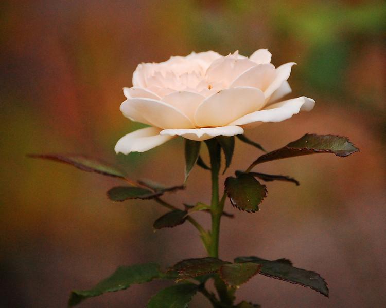 Victorian Flower