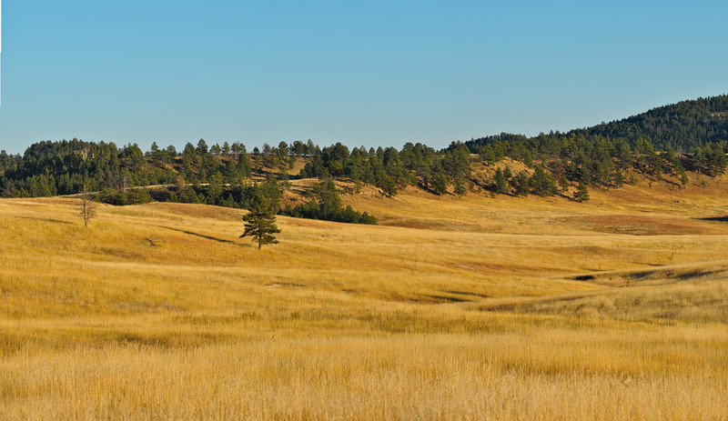 Custer State Park Pano