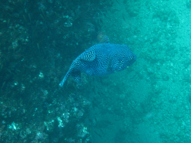 Diving in the Galapagos (389 of 392)