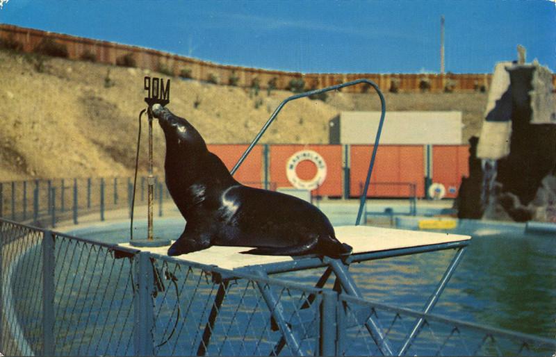 Educated Sea Lion