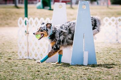 Sport Dogs
