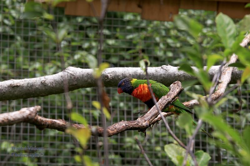 2016-07-17 Fort Wayne Zoo 914LR.jpg