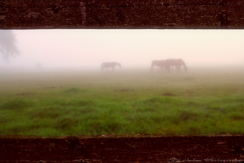 """Looking through a window, they are within a dream.  """"A horse is the projection of peoples' dreams about themselves - strong, powerful, beautiful - and it has the capability of giving us escape from our mundane existence."""""""