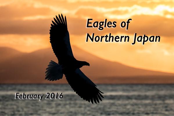 Eagles of Northern Japan