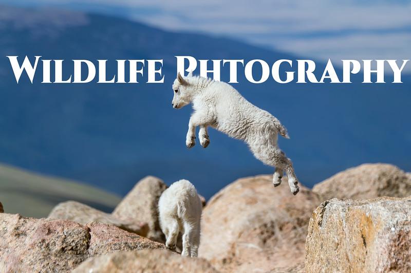 IMG_6993.jpg-sheep.jpg