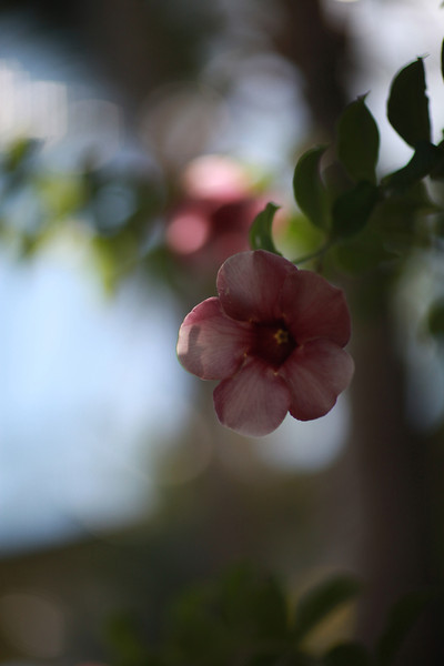 Kauai_D5_AM 080.jpg
