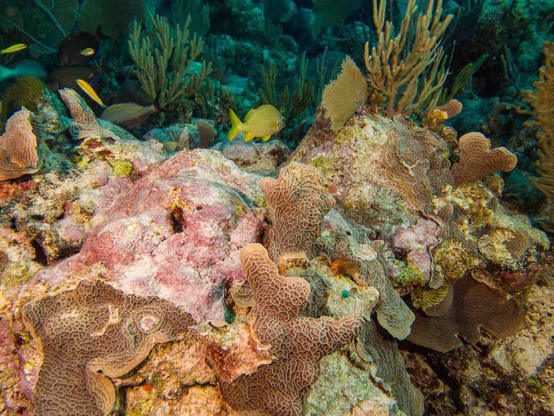 Tulum Trip - Diving 20130405-17-58 _405264704.jpg